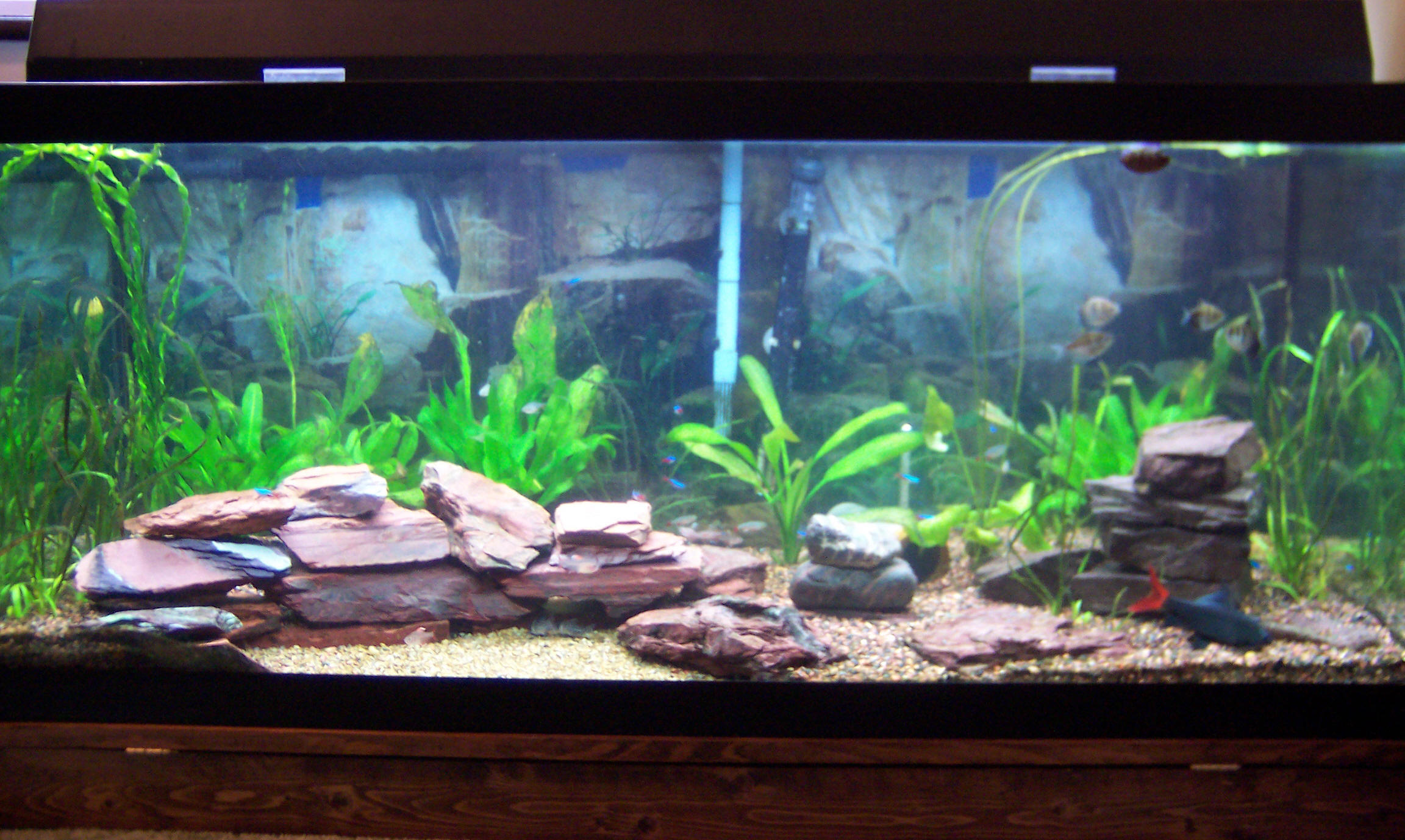Pin Cylinder Fish Tanks Aquariums on Pinterest